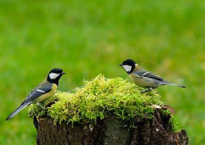 Vogelcursus deel 6 – 17 mrt GEANNULEERD