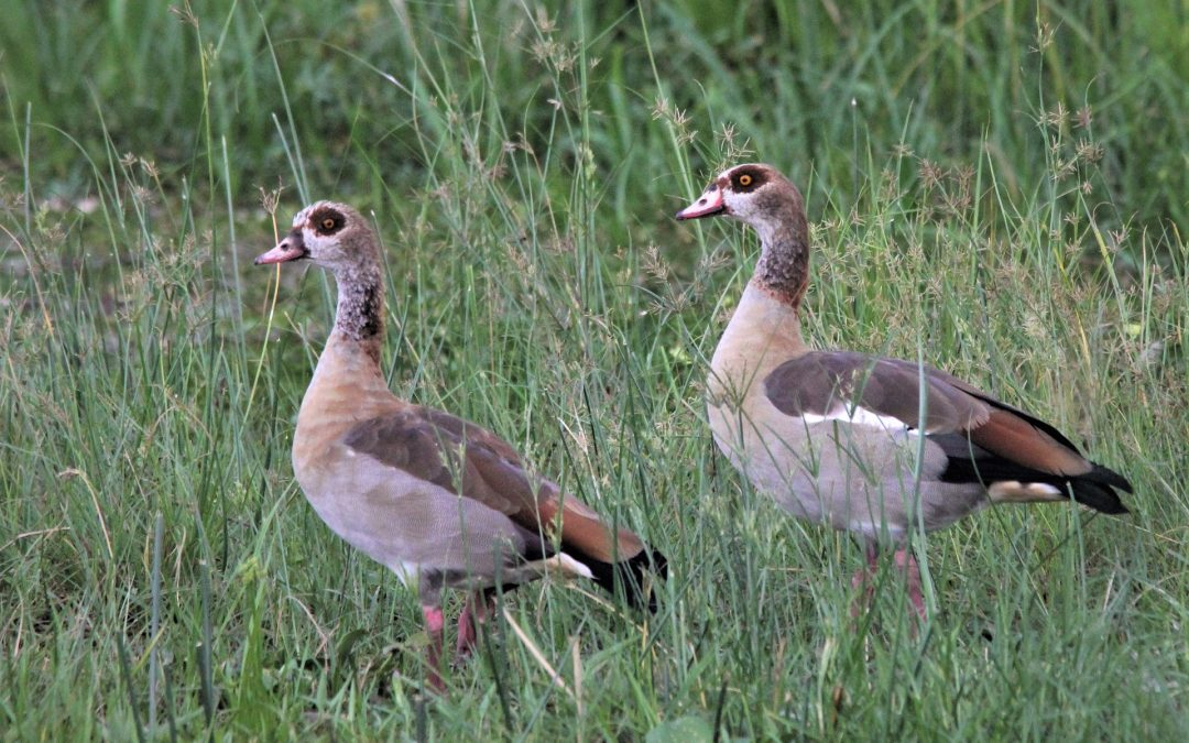 Vogelcursus deel 7 – 21 apr
