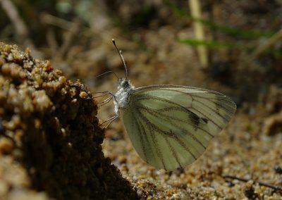 Terrarium vlinders