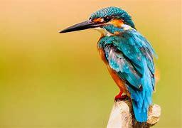 Start Natuur-fotowedstrijd!